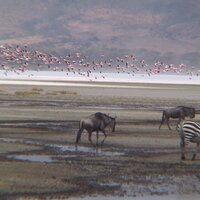 Wildlife im Ngorongoro Krater