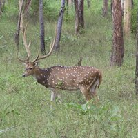Pench Nationalpark